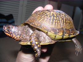 In Loving Memory, Tinkerbell the turtle