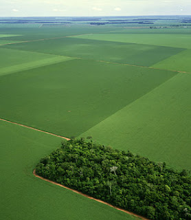 A tiny sliver of transitional rain forest is surrounded by hectares of soybean fields in the Mato Grosso state, Brazil.