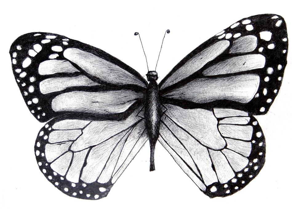 Butterflies Drawings, Butterfly Drawing