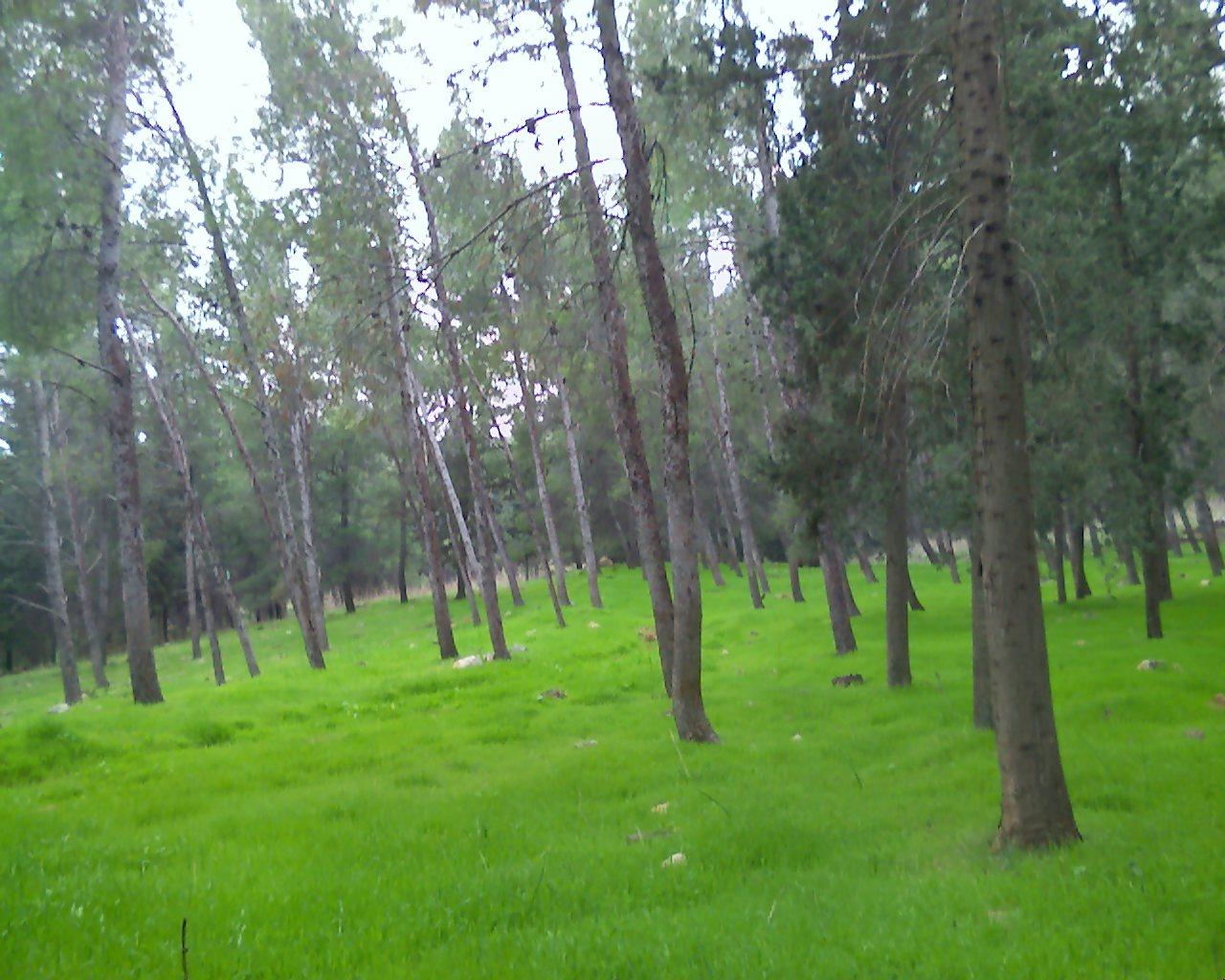 [Grass]