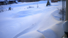 We awoke to snow dunes Dec 2010