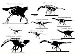 When Pigs Fly Returns: Therizinosaur Pelves are Wierd