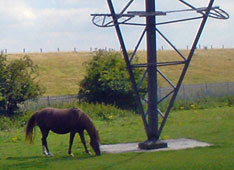 pony nibbles pylon