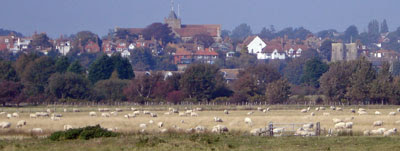 Rye, from the southern marshes)