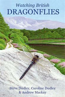 the only dragonfly guide you'll ever need!