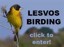 LESVOS BIRDING ΛEΣBOΣ
