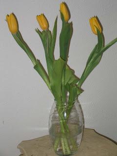 Vissers tulips after