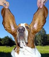 Multas por conducir con tapones en los oídos u orejeras