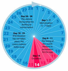 What is best time to have intercourse
