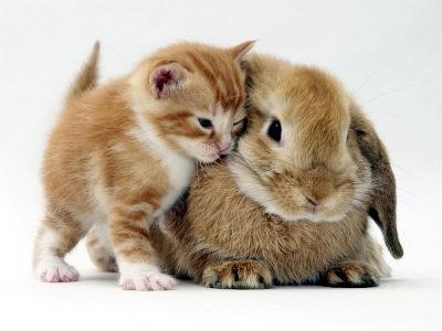[bunny1.jpg]