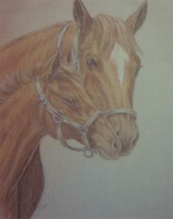 19x22  Oil Pastel (Mare and colt)