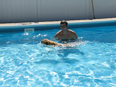 dog activities golden retriever puppy swimming in pool