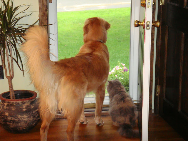 dog and cat looking out window #wordlesswednesday