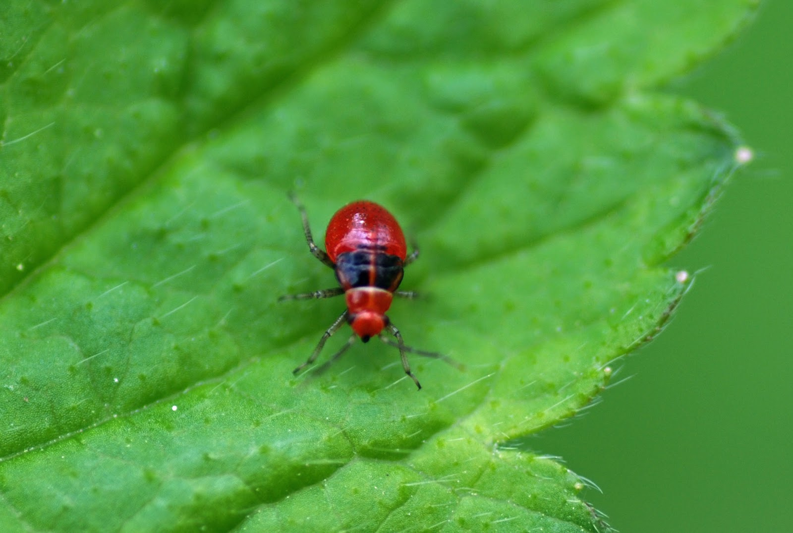 Mobugs Plant Bugs