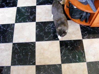 Red Dog Blog Kitchen Flooring Installed