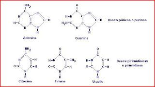 Unidades Tematicas De 4º Medio Biologia El Blog De