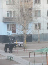 Horses Tied to a Swing Set Outside My Window
