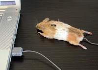 Calling a mouse a mouse 1