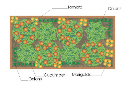 A Companion Planting Vegetable Garden Layout Growing The Home Garden – Planting Vegetable Garden Layout