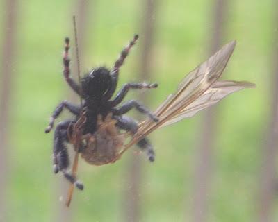 Along Came a Spider... - Growing The Home Garden