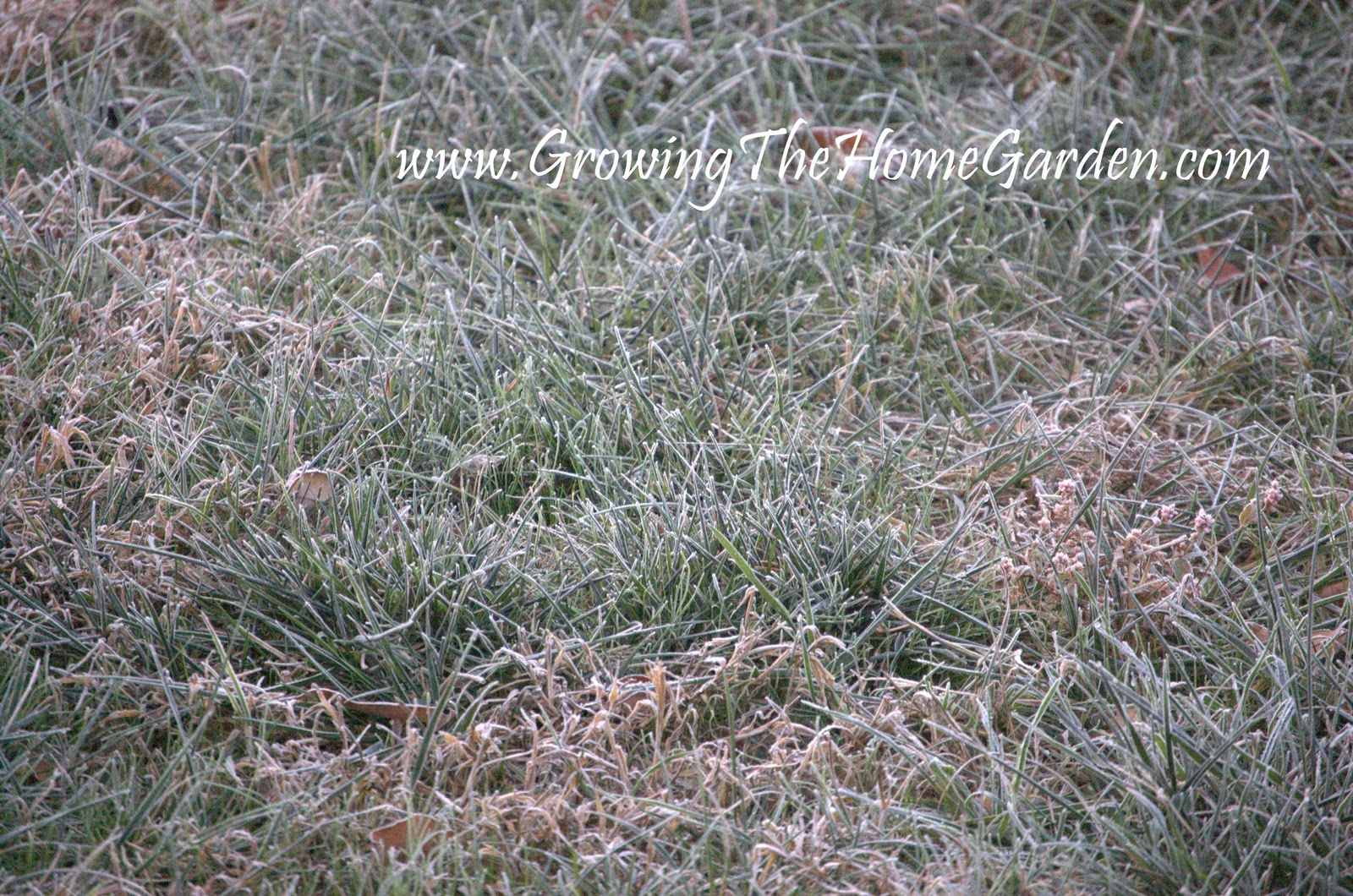 Frosted in Fall (Photo Post) - Growing The Home Garden