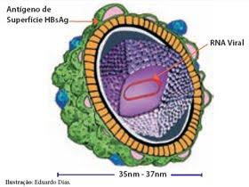 Hepatite d ist for B b com