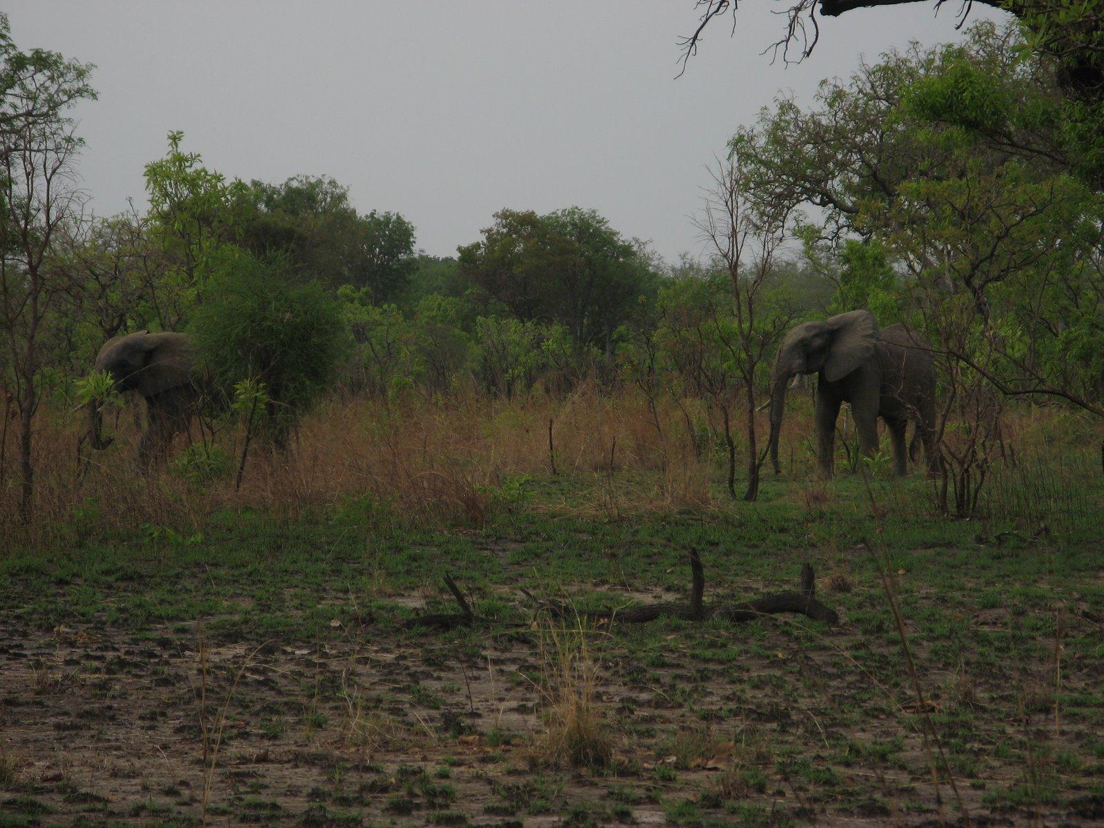 [Elephants]