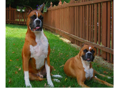 Oscar (L) & Sherman (R)