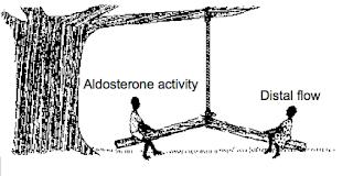 Aldosterone escape versus Aldosterone breakthrough