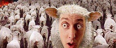 [sheeple.jpg]