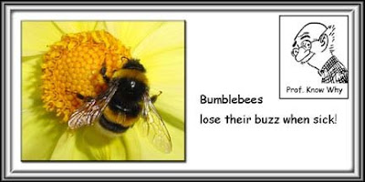Bees lose their buzz