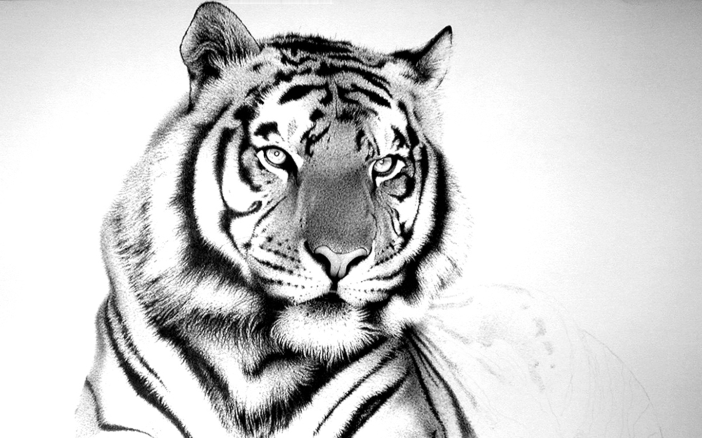 Colourful Wallpapers: White-Black Tiger