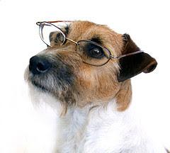http://bp0.blogger.com/_PGvSoaafXiI/RzcULAdvcVI/AAAAAAAAA-c/laeMdB0Hi1g/s320/terrier-glasses.jpg