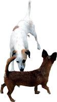 Earth belongs to all dogs