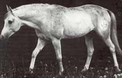 Fetysz ox