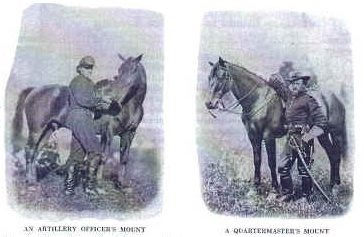 Civil War Horses
