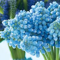 AZUL+7 Tudo azul...!
