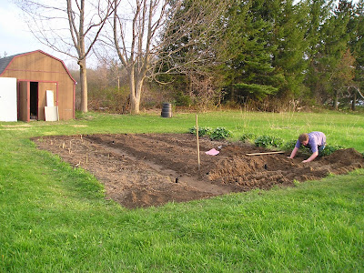 The Refurbished and Expanded Asparagus Bed