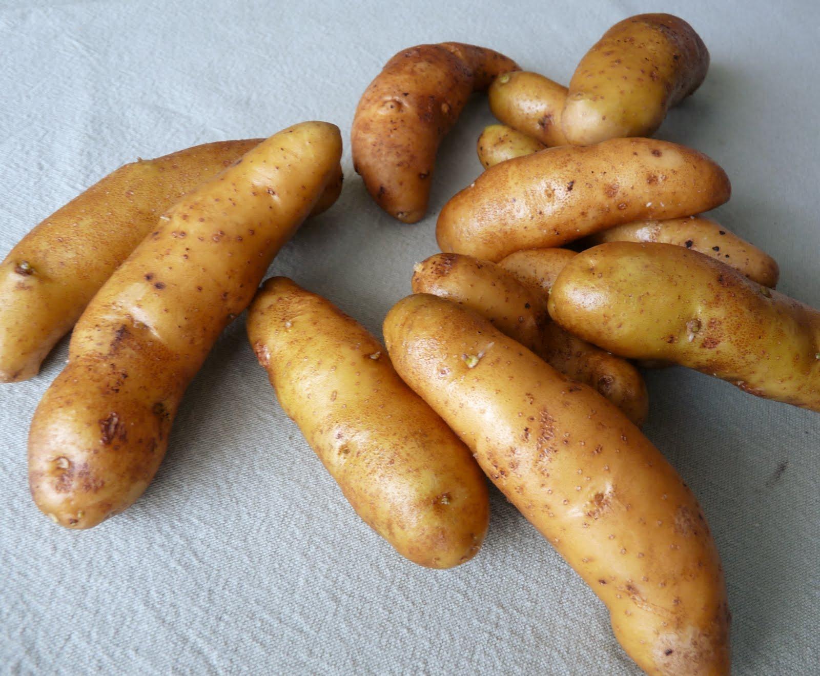 Ratte Kartoffeln