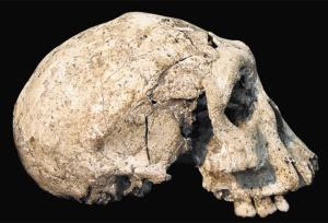 Skull Discovered in Georgia 1.8 Million Years Old