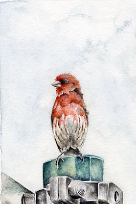 finch watercolour painting
