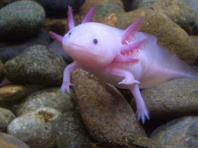 Sad Fish: Fish with Legs and Hands