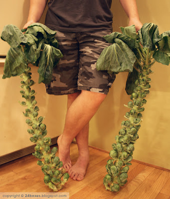 raw weapons-grade brussels sprouts