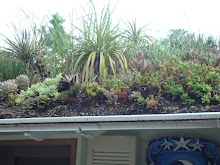Green Roof, Non-Irrigated, Extensive