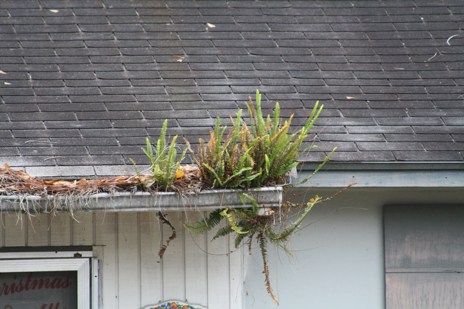Kevin Songer Green Roof Plants How Do I Choose Quick