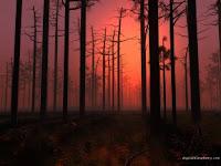 nebbia di bosco