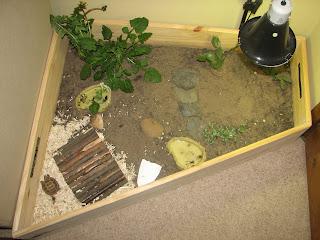 Horsefield tortoise indoor tortoise table for Tortoise table org uk