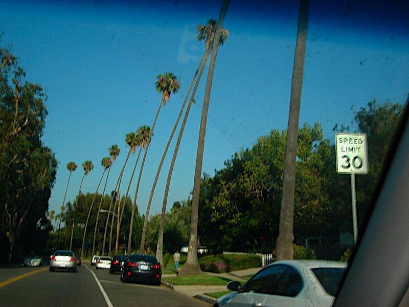 [Palm+Trees]