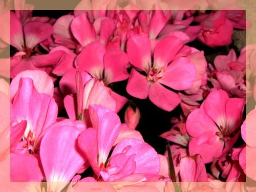 [roosa+2.jpg]
