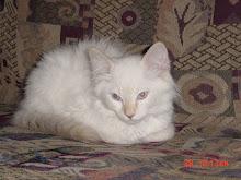 Our New Little Kitten